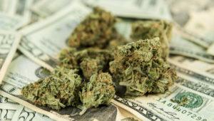 Marihuana sobre billetes de dólares.