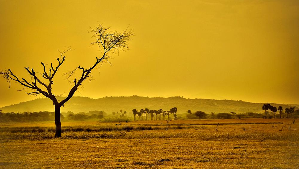 Las temperaturas terrestres están aumentando 20% más rápido que lo que se había registrado en la historia de nuestro planeta. Pixabay
