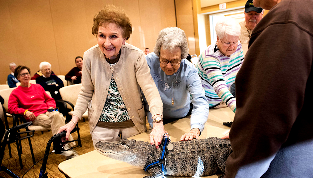 Gloria Watson, left, and Alice Brown pet Wally, a 4-foot-long emotional support alligator, at the SpiriTrust Lutheran Village at Sprenkle Drive, Monday, Jan. 14, 2019. (Photo: Ty Lohr, York Daily Record)