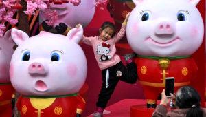 Fotografía del 28 de enero de 2019 de una niña china posando para una foto entre esculturas de cerdos exhibidas afuera de un centro comercial en Nanning, en la región autónoma Guangxi Zhuang en el sur de China. (Chinatopix vía AP)