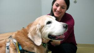 La veterinaria Lindsey Bullen examina a Benko, un golden retriever con problemas de peso, en una clínica de animales de Cary, Carolina del Norte, el 15 de marzo del 2019. Bullen dice que muchos clientes le consultan sobre los supuestos beneficios de la comida fresca. (AP Photo/Allen G. Breed)