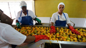 Fotografía fechada el 13 de junio de 2018, muestra a varias mujeres que trabajan en una fábrica de conservas en Baracoa (Cuba), en el extremo oriente de la Isla. EFE/Ernesto Mastrascusa