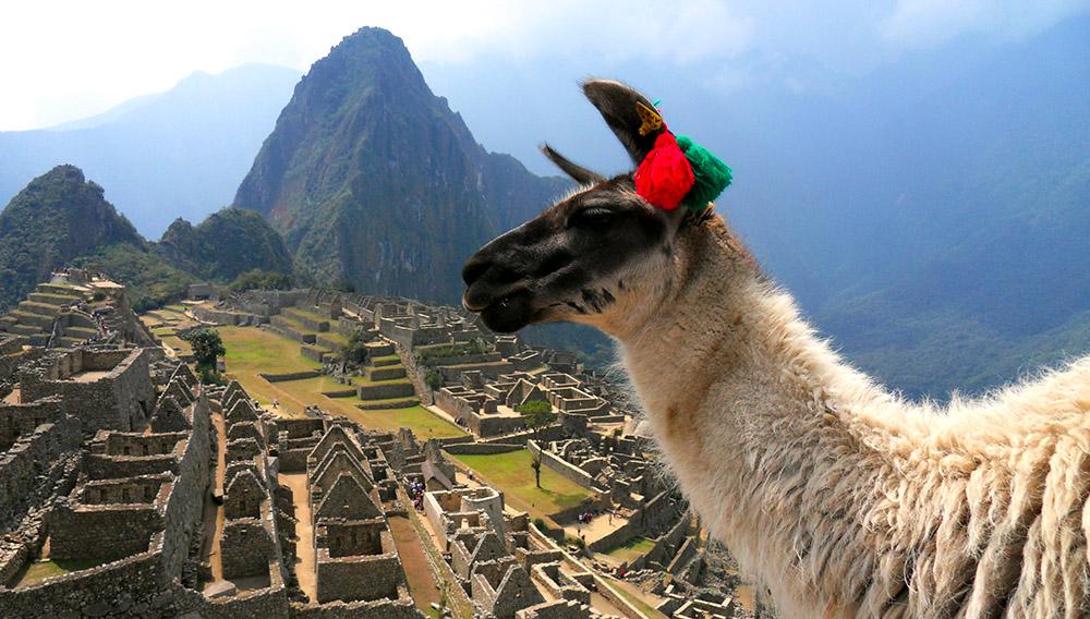 Una llama en Machu Picchu. Foto: robros61 (Flickr)