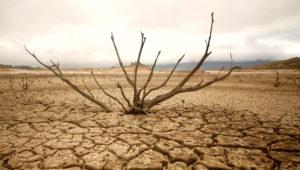 Sécheresse catastrophique en Afrique du Sud. REUTERS /MIKE HUTCHINGS