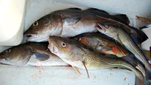 Pesca de bacalao. | Pixabay.com