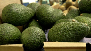 Foto tomada el 17 de enero del 2007 de aguacates en un mercado de Mountain View, California. (AP Photo/Paul Sakuma, File)