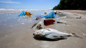 Dead fish on a beach surrounded by washed up garbage. | iStock by Getty Images