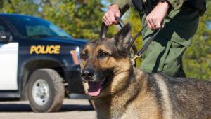 Perro de policía con oficial de la unidad K 9 y vehículo de policía en el fondo.   KellyNelson/Shutterstock