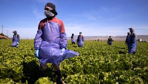 Farm laborers from Fresh Harvest working with an H-2A visa maintain a safe distance as a machine is moved in Greenfield, California, on April 27, 2020. Getty/Brent Stirton