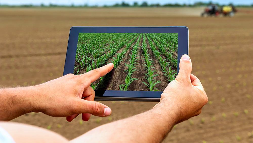 Smart agriculture. Farmer using tablet corn planting.   Photo: Dreamstime.com